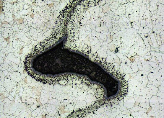 Image captued with DeltaPix microscope camera