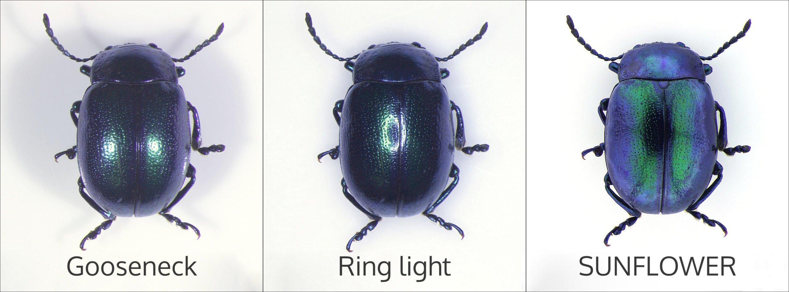 dung-beetle-illuminators-comparison