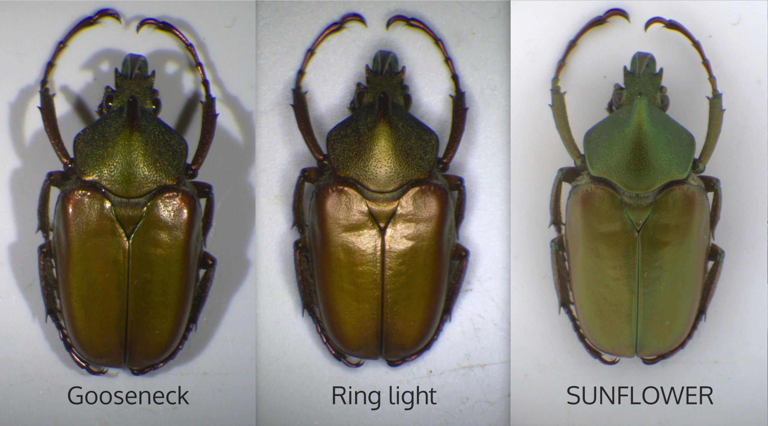 green-beetle-illuminators-comparison